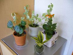観葉植物で癒しの空間